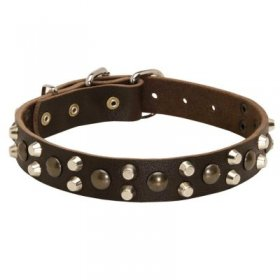 Leather Samoyed Collar With Studs and Pyramids