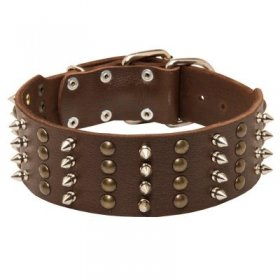 Extra Wide Leather Spiked and Studded Samoyed Collar