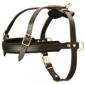 Leather Samoyed Harness for Tracking and Pulling