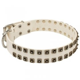 White Leather Samoyed Collar with Old Nickel Square Studs for Daily Dog Walking - NEW OFFER