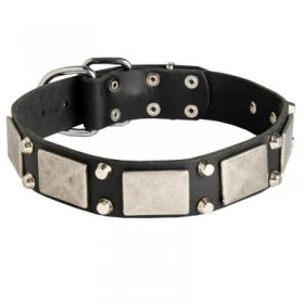 Leather Samoyed Collar Decorated with Nickel Cones and Plates