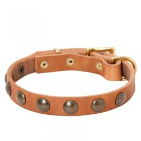 Leather Samoyed Collar with Brass Half-Ball Studs