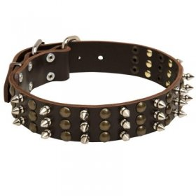 Samoyed Spikes and Studs Rows Leather Dog Collar