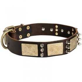Designer War-Style Leather Samoyed Collar with Spikes and Plates