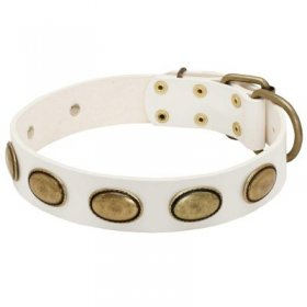 White Leather Samoyed Collar with Brass Oval Plates