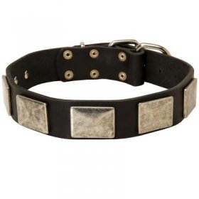 Leather Samoyed Collar with Large Nickel Plates