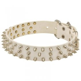 Designer Spiked Leather Samoyed Collar for Fashionable Walking