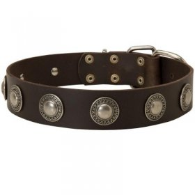 Leather Samoyed Collar Decorated with Silver Conchos