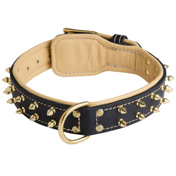 Leather Samoyed Collar Spiked Padded with Nappa Leather Adjustable