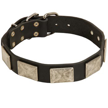 Walking Leather Samoyed Collar