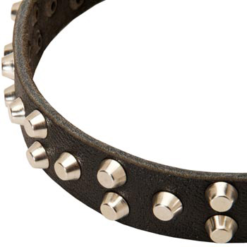 Leather Samoyed Collar Durable Stud Decorated
