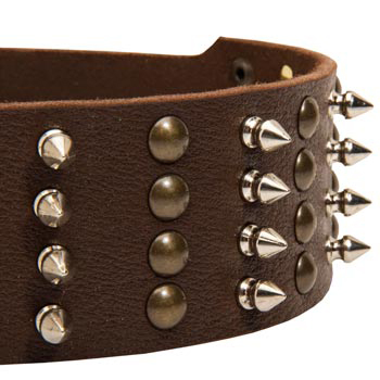 Samoyed Leather Collar with Rust-proof Fittings