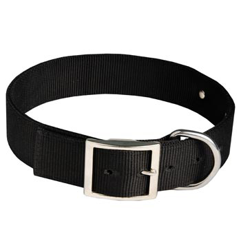 Samoyed Training Collar with ID Tag