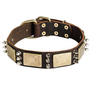 War-Style Leather Dog Collar for Samoyed
