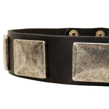 Wide Leather Samoyed Collar for Walking