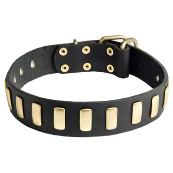 Samoyed Collar Leather with Brass Hardware