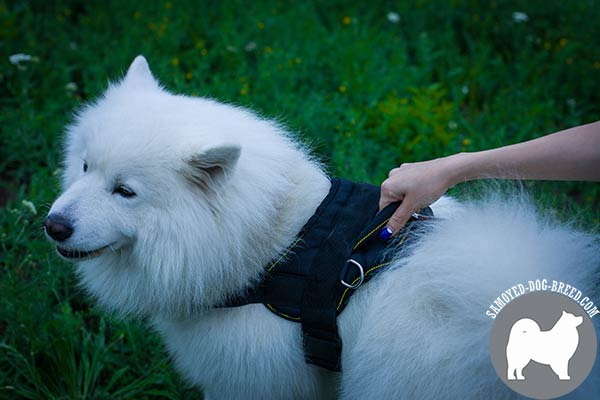 Extra Strong Nylon Samoyed Harness with Additional D-Rings