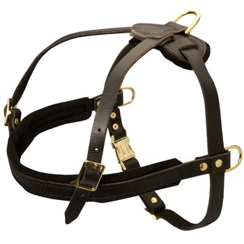 Leather Samoyed Harness for Dog Off Leash Training