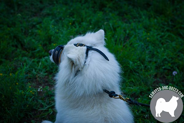 Easy Adjustable Leather Samoyed Muzzle