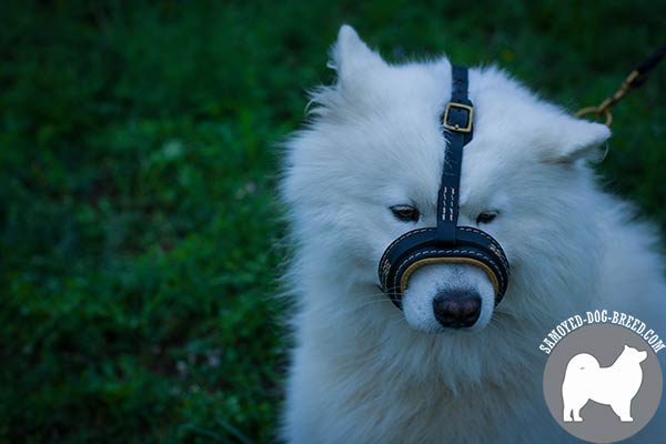 Easy to Use Leather Samoyed Muzzle