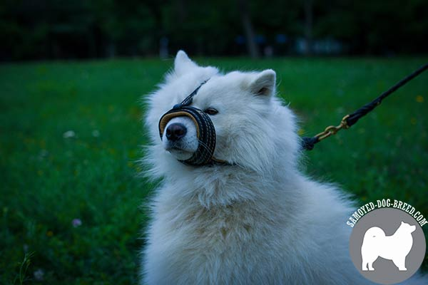Premium Quality Nappa Padded Leather Samoyed Muzzle