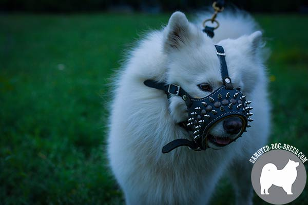 Soft Nappa Padded Leather Samoyed Muzzle Decorated with Spikes and Studs