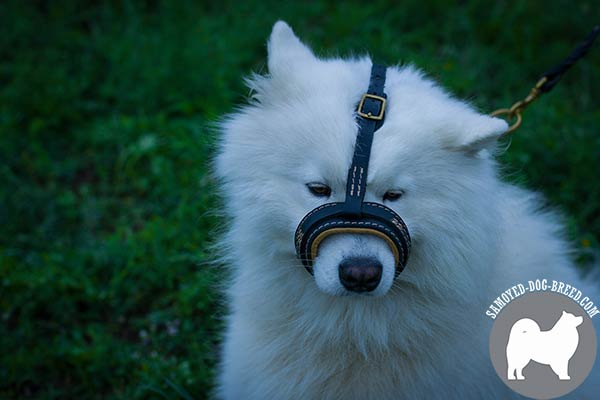 Samoyed Muzzle of Natural Leather