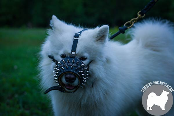 Well-Ventilated Spiked and Studded Leather Samoyed Muzzle with Open Nose Area