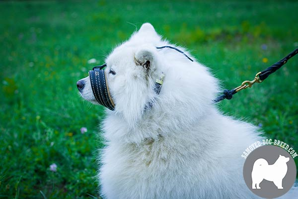 Properly Stitched Leather Samoyed Muzzle