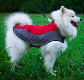 Samoyed Dog Breed Standard